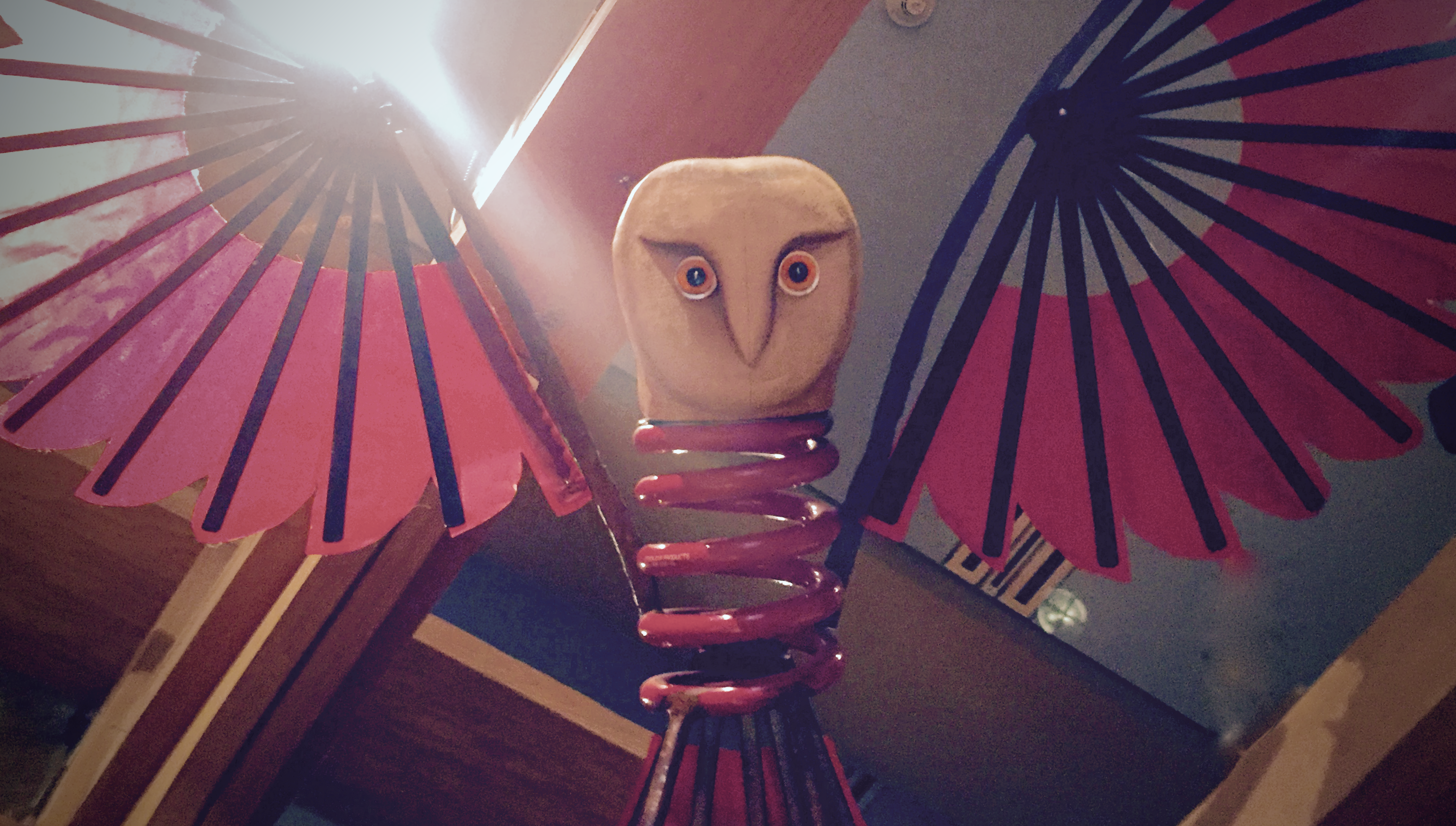 a red owl
