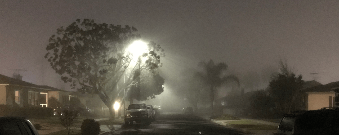 Streetlight cutting through fog and a tree